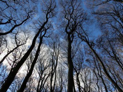 建築材料としての木材の有益な健康効果